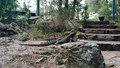 Australian Water Dragon on a rock in the Botanic Garden 01.png