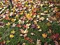 Autumn E2.jpg