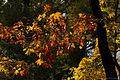 Autumn colors (8123254609).jpg