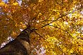 Autumn in the forest (22049336594).jpg