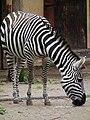 Böhm Zebra.JPG