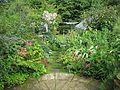 Back garden - Flickr - peganum (1).jpg