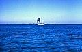 Bahamas 1989 (467) Abaco Parrots Cays (24311372224).jpg