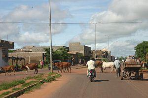 Bamako: Bamako cattle