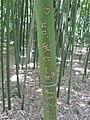 Bamboe met inkervingen.JPG