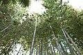 Bambouseraie de Prafrance 20100904 076.jpg