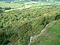 Barrowfield Wood - geograph.org.uk - 946472.jpg