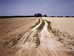 Bean field under cultivation, Seabrook Farm 1a33782v.jpg