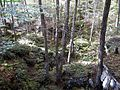 Bear-rocks-spring ForestWander.JPG