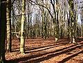 Beech wood, Lansdown - geograph.org.uk - 713496.jpg
