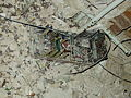 Beelitz Heilstätten -jha- 195237339346.jpeg