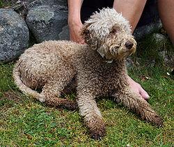 Dog Grooming Reno Nv Mobile