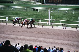 Horses race down the stretch on Belmont Park's...