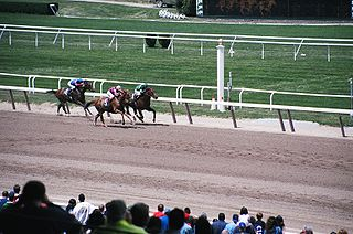 Belmont Stakes American stakes race for Thoroughbreds, part of the Triple Crown
