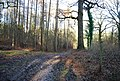 Bend in the Hangers Way, Hartley Wood - geograph.org.uk - 1207127.jpg