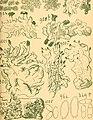 Bericht des Naturwissenschaftlichen Vereins für Schwaben und Neuburg (a.V.) in Augsburg (1908) (19744928263).jpg