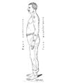 Bertillon - Identification anthropométrique (1893) 348 n&b.png