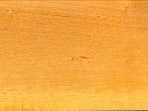 Betula pendula wood ray section 1 beentree.jpg