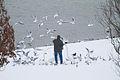Bird Feeding (5508275941).jpg