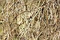 Birdie (4521224306).jpg