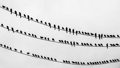 Birds on the wire - crop.jpg