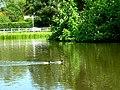 Bishop Burton Village Pond - geograph.org.uk - 184464.jpg