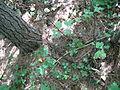 Black Moshannon State Park garter snake.jpg