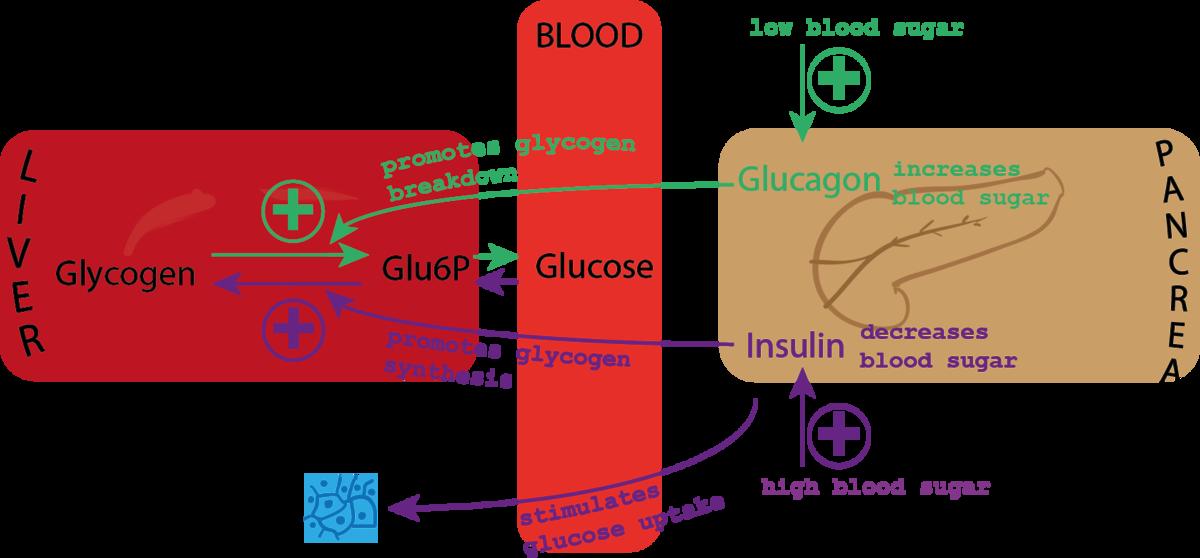 diabetes blodsukker