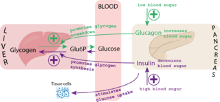 Blood Sugar After Fasting And  After Food