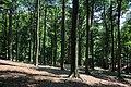 Bois du Pottelberg - Pottelbergbos 02.jpg