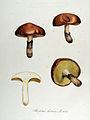 Boletus luteus — Flora Batava — Volume v13.jpg