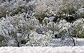 Bombone Rignano sull Arno nevicata del 25 marzo 2020.jpg