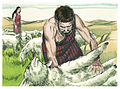 Book of Genesis Chapter 29-7 (Bible Illustrations by Sweet Media).jpg
