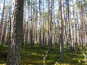регионов россии занимают леса