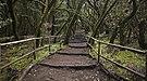 Bosque Encantado, Parque nacional de Garajonay, La Gomera, España, 2012-12-14, DD 19.jpg