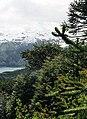 Bosque primario 05.jpg