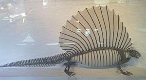Edaphosaurus - Skeleton of Edaphosaurus