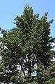 BotGardenFomin DSC 0124-1.jpg