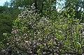 BotGardenFomin DSC 0256-1.jpg