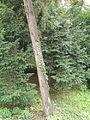 Botanička bašta Jevremovac 013.JPG