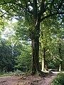 Botanical garden in Zugdidi(03).jpg