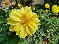 Botanical garden tbilisi.jpg