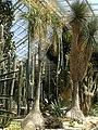 Botanischer Garten 24.07.2012 - panoramio (2).jpg