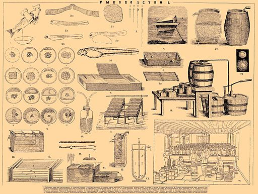 Brockhaus and Efron Encyclopedic Dictionary b53 416-1