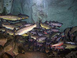 aa60894a93b Tennessee Aquarium - Wikipedia