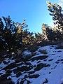 Brownie Creek Toiyabe National Forest USMC Mountain Warfare Training Center 2014 near Coleville, California 96107 - panoramio (1).jpg
