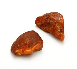 Baltic amber type of amber from the Baltic area