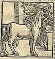 Bucephalus eating Grass from Cosmographia (1544) by Sebastian Münster .jpg