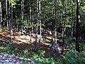Buchenwald zwischen Resiatal und Carnizzasattel 14072007 01.jpg