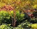 Butchart Gardens - Victoria, British Columbia, Canada (28732328324).jpg